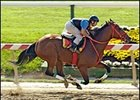 Afleet Alex, breezing at Pimlico Wednesday.