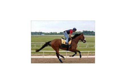 Kentucky Derby winner Barbaro on the track at Fair Hill Training Center.