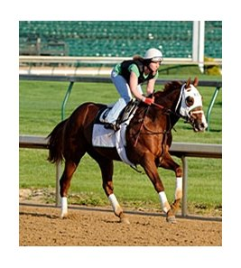"Dublin sizzled five furlongs in :59.20 at Churchill Downs on April 19.<br><a target=""blank"" href=""http://www.bloodhorse.com/horse-racing/photo-store?ref=http%3A%2F%2Fpictopia.com%2Fperl%2Fgal%3Fprovider_id%3D368%26ptp_photo_id%3D8898649%26ref%3Dstory"">Order This Photo</a>"