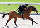 Zayat Horses in Keeneland April Juvenile Sale
