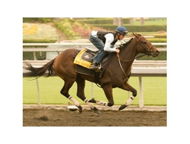 Mine That Bird breezes over the Santa Anita track in preparation for the Goodward Stakes on Oct. 10.