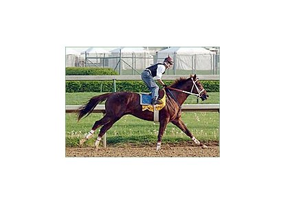 "Haskin: ""...blistering five-furlong works by Smarty Jones (pictured) and Birdstone dominated the morning activities Saturday."""