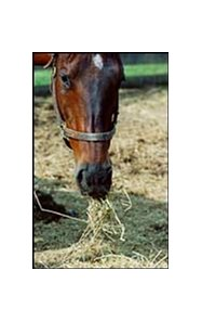 Many farm managers are moving their mares to stalls or drylots and feeding hay.