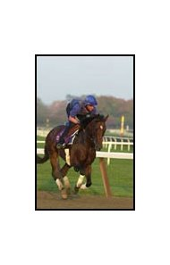 Sakhee, shown last fall before the Breeders' Cup, turned in a solid workout Tuesday in England.
