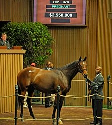 Giant's Causeway Filly Brings $2,550,000