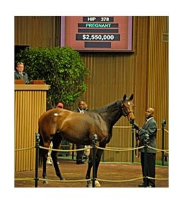 Hip #378, Dreamtheimpossible in foal to Galileo brings $2,550,000 at the Keeneland November Mixed Breeding Stock sale.