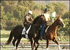 Halfbridled, Other Mandella Horses Breeze