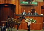Hip #1, Silver Deputy - Daisy Dukes by Ghazi, brought $520,000 to top the auction.