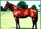 Stallion End Sweep, euthanized as a result of an injury.