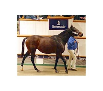 Ipi Tombe, brought top price at Tuesday's session of Tattersalls' December sale.