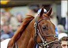 2003 Eclipse 3YO Male of the Year: Funny Cide