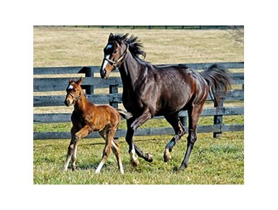 Rachel Alexandra and her Foal.