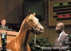 Racehorse Market Grows at Keeneland