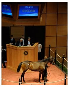 Hip #245, a $350,000 Medaglia d'Oro filly, was the most expensive horse sold during the final session of the Fasig-Tipton Kentucky July select yearling sale.