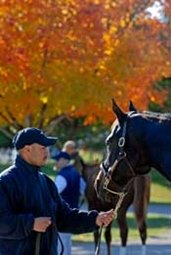 Solid Market Expected for Keeneland November Breeding Stock Sale