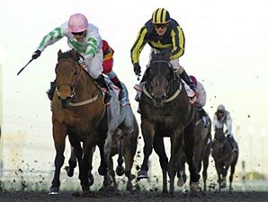 Hitchens Edges Krypton Factor in Al Shindagha