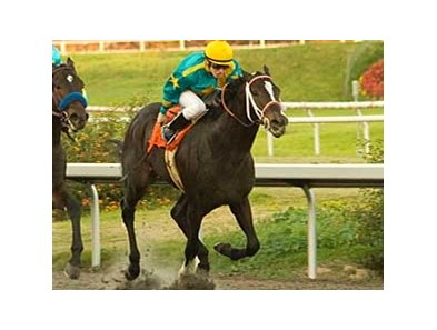 I Want Revenge was a close second in the CashCall Futurity at Hollywood Park last December.