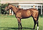 Parade Ground, one of 20 foals produced from Battle Creek Girl.