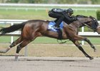 Empire Maker Filly Among F-T Sale Standouts