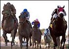 Sir Bear (left), winning the 1 1/4-mile Gulfstream Park Handicap (gr. I) in his 2001 debut.