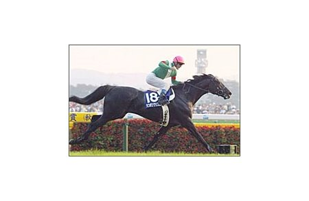 Japanese Horse of the Year Symboli Kris S, winning the Emperor's Cup.