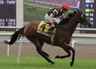 Rahy's Attorney, who won the 2009 Nijinsky, will try to defend his crown in 2010.