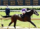 Competitive Edge to Ashford Stud for 2016