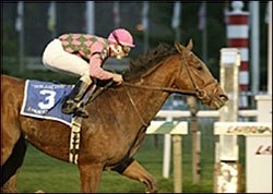 A Huevo Euthanized After W. Va. Classic