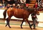 Soinlovewithyou, Lot 1417, at the December Sales.