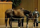 A mare and her foal in the sales ring at Keeneland Jan. 12