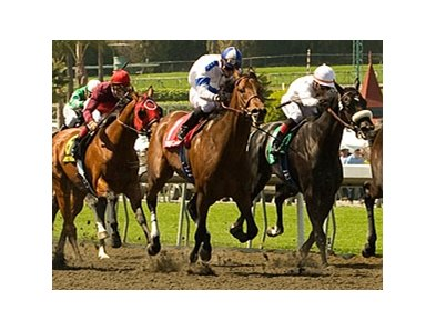 Chocolate Candy in the stretch of the Santa Anita Derby