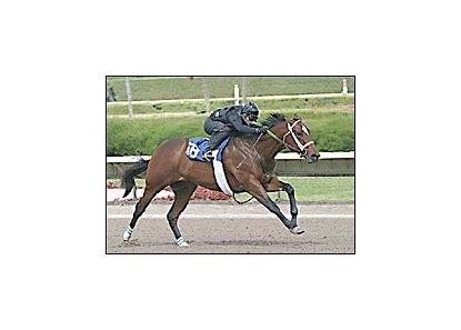Tale of the Cat colt, during pre-sale workout.