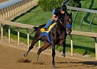 Pioneerof the Nile Cruises in 1:01 Work
