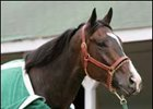 "Lava Man will carry 124 in his quest to add a third Gold Cup on June 30th.<br><a target=""blank"" href=""http://www.bloodhorse.com/horse-racing/photo-store?ref=http%3A%2F%2Fpictopia.com%2Fperl%2Fgal%3Fprovider_id%3D368%26ptp_photo_id%3D631837%26ref%3Dstory"">Order This Photo</a>"