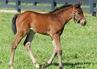 Sea The Stars Filly Born at Lane's End
