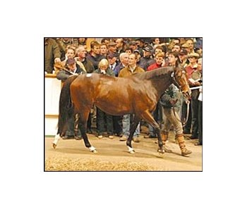 Magical Romance, sold for a world-record price at Tattersalls.