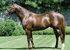 Lion Heart is one of several U.S. based stallions that shuttle to Australia for the 2008 breeding season.