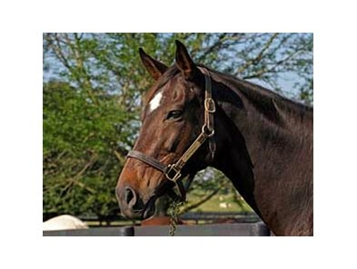 2008 Kentucky Broodmare of the Year Vertigineux
