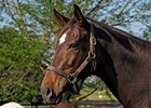 2008 Kentucky Broodmare of the Year - Vertigineux