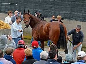 American Pharoah with the media and his fans.