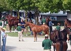 Book Three Ends with Solid Trade at Keeneland