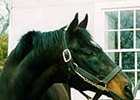 Green Dancer, the stallion pensioned at Gainesway Farm, was euthanized Friday.