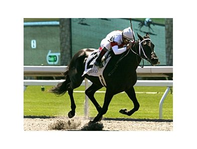 Heavenville could win the 1st-year sire race for Offlee Wild in the Louisiana Futurity.