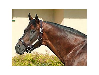 Ascot Knight, one of Canada's top stallions for a number of years, was euthanized Feb. 8.