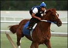 "Curlin on track July 31st, prepping for the Haskell Stakes.<br><a target=""blank"" href=""http://www.bloodhorse.com/horse-racing/photo-store?ref=http%3A%2F%2Fpictopia.com%2Fperl%2Fgal%3Fprovider_id%3D368%26ptp_photo_id%3D1865491%26ref%3Dstory"">Order This Photo</a>"