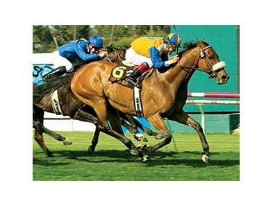 "The Tin Man's last win came in the 2007 Shoemaker Mile (gr. IT). <br><a target=""blank"" href=""http://www.bloodhorse.com/horse-racing/photo-store?ref=http%3A%2F%2Fpictopia.com%2Fperl%2Fgal%3Fprovider_id%3D368%26ptp_photo_id%3D1292138%26ref%3Dstory"">Order This Photo</a>"
