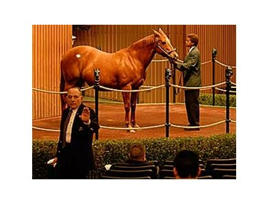 Premium Red sold for $700,000 Monday as the Keeneland January auction got under way.