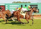 Ballymore Lady won the grade III Endeavor Stakes in February.