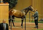 Lady Joanne, hip 381, brings $1.25 million during the Nov. 4 morning session of the Keeneland Sale.