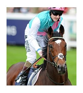 "Frankel<br><a target=""blank"" href=""http://photos.bloodhorse.com/AtTheRaces-1/at-the-races-2012/22274956_jFd5jM#!i=2213989461&k=JrJDz5V"">Order This Photo</a>"